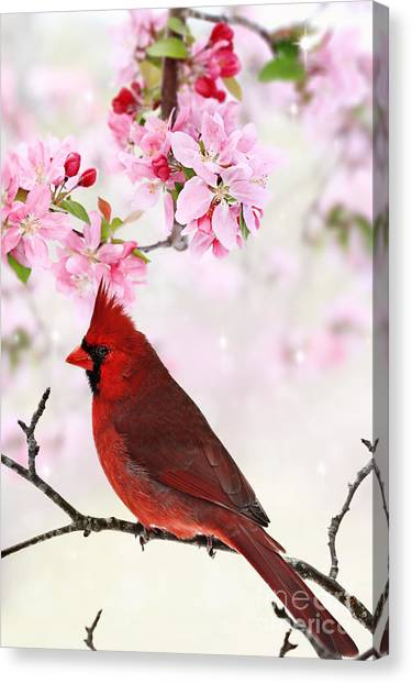 Cardinal Amid Spring Tree Blossoms Canvas Print