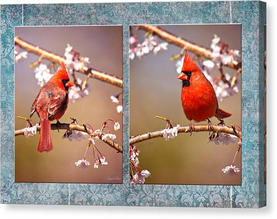 Canvas Print featuring the photograph Cardinal Collage by Angel Cher