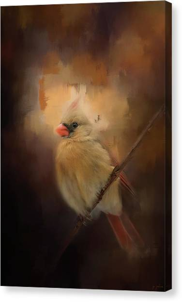 Cardinal In The Evening Light Bird Art Canvas Print