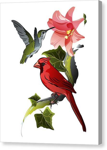 Cardinal On Ivy Branch With Hummingbird And Pink Lily Canvas Print