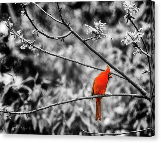 Cardinal... Canvas Print