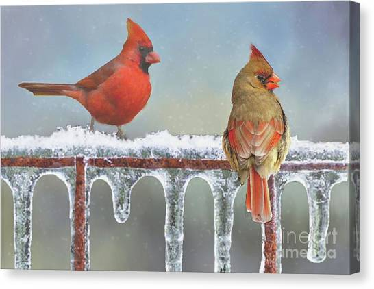 Cardinals And Icicles Canvas Print