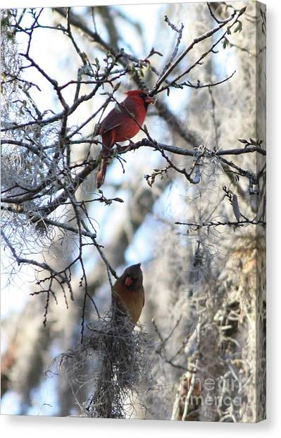 Cardinals In Mossy Tree Canvas Print