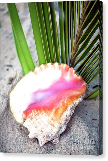 Caribbean Conch Canvas Print by John Rizzuto