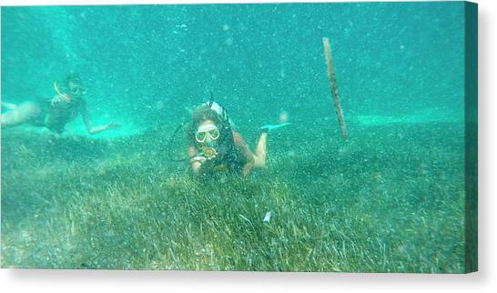 Puffer Canvas Print - Caribbean Diving by Betsy Knapp