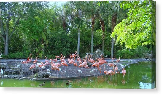 Caribbean Flamingos Canvas Print by Tammy Chesney