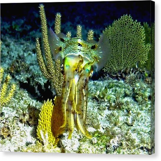 Caribbean Squid At Night - Alien Of The Deep Canvas Print