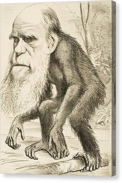Apes Canvas Print - Caricature Of Charles Darwin by English School