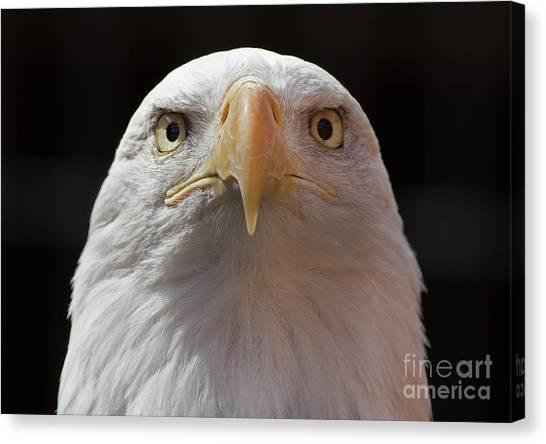 Carlisle Eagle Canvas Print