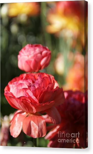 Carnival Of Flowers 01 Canvas Print