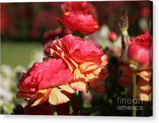 Carnival Of Flowers 03 Canvas Print