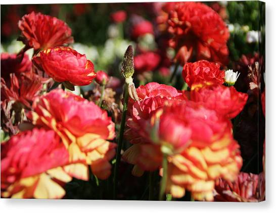 Carnival Of Flowers 04 Canvas Print