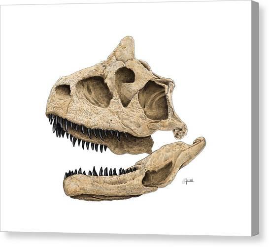Carnotaurus Skull Canvas Print