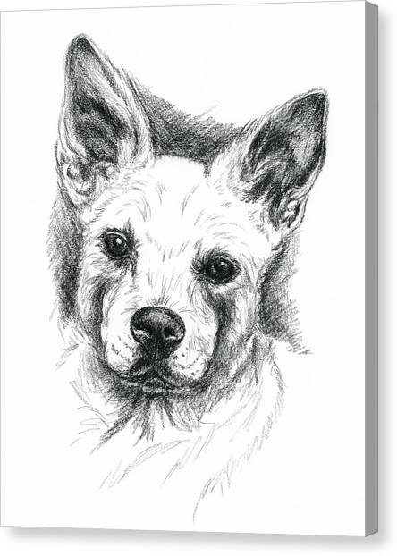 Canvas Print featuring the drawing Carolina Dog Charcoal Portrait by MM Anderson