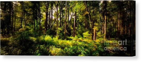 Carolina Forest Canvas Print