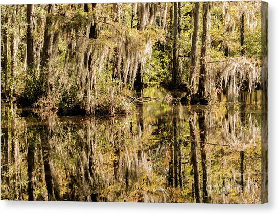 Weeping Willows Canvas Print - Carolina Swamp by DiFigiano Photography