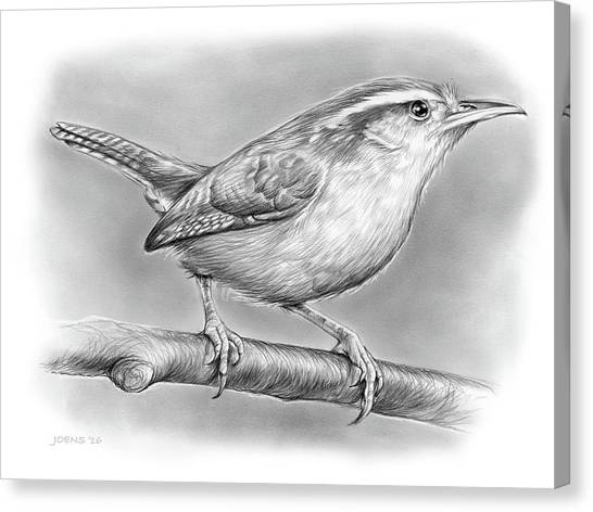 Wrens Canvas Print - Carolina Wren by Greg Joens
