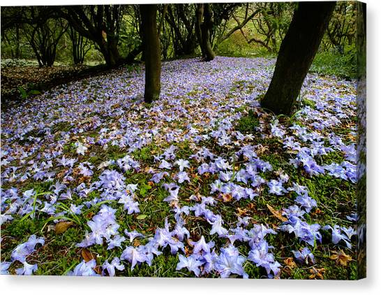 Carpet Of Petals Canvas Print