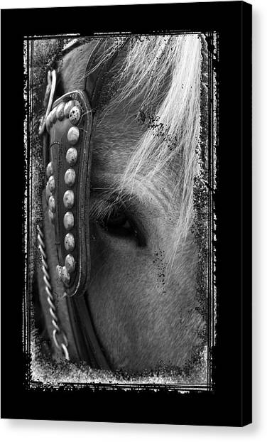 Carriage Horse B And W Canvas Print
