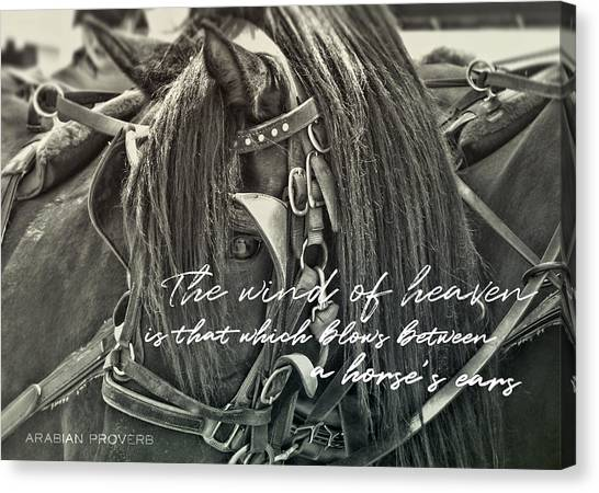 Carriage Horse Quote Canvas Print