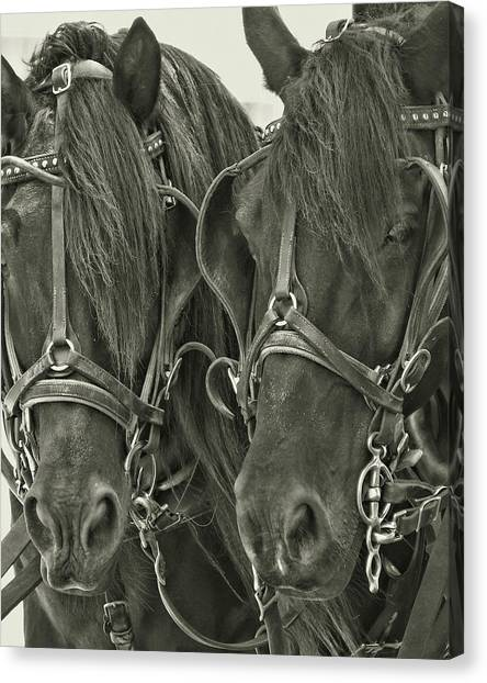 Paired Carriage Ponies Canvas Print by JAMART Photography