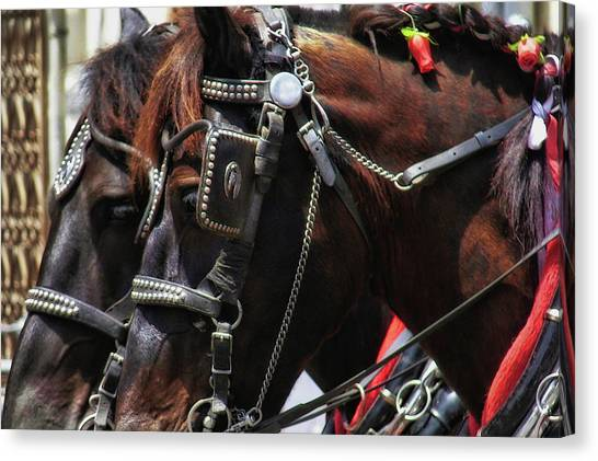 Carriage Tour Canvas Print by Dressage Design