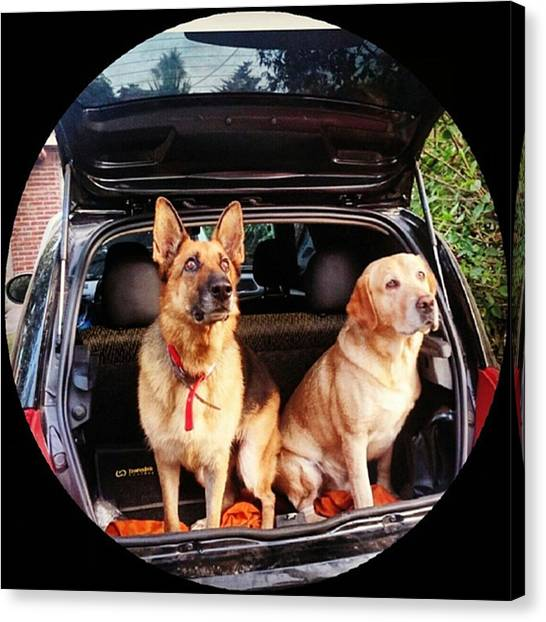 Portal Canvas Print - #carride #dog #dogs by Fernando Portal