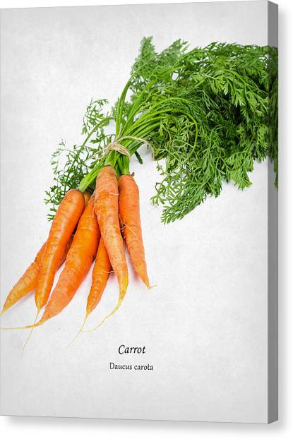 Carrots Canvas Print - Carrot by Mark Rogan