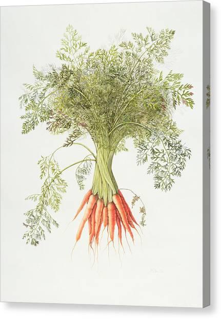 Carrots Canvas Print - Carrots by Margaret Ann Eden