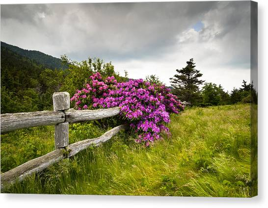 Carvers Gap Roan Mountain State Park Highlands Tn Nc Canvas Print