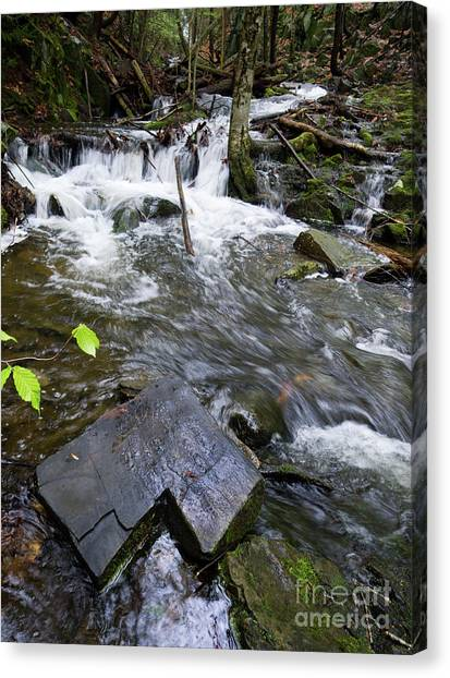 Cascade Falls Stream, Farmington, Maine  -30329 Canvas Print