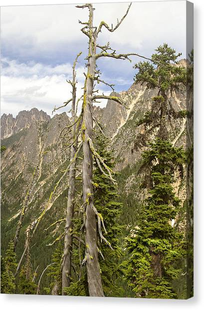 Cascades Tree Canvas Print