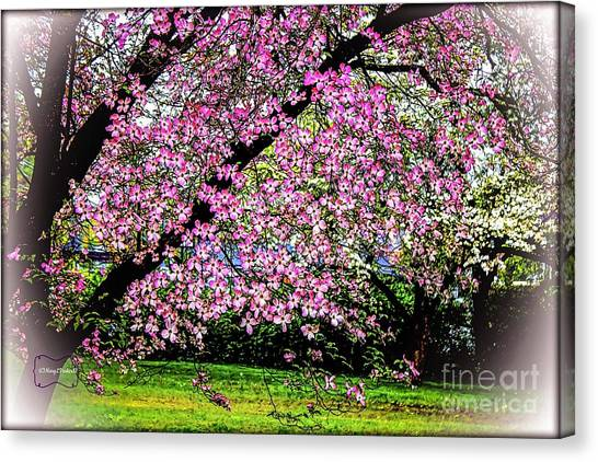 Cascading Dogwood Copyright Mary Lee Parker 17, Canvas Print