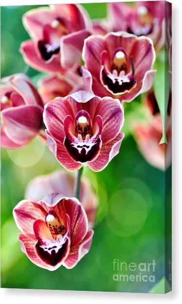 Cascading Miniature Orchids Canvas Print