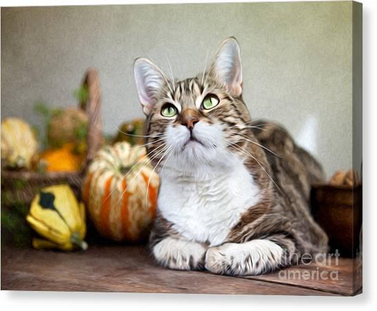 Pumpkins Canvas Print - Cat And Pumpkins by Nailia Schwarz