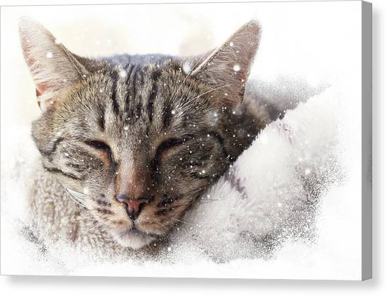 Cat And Snow Canvas Print