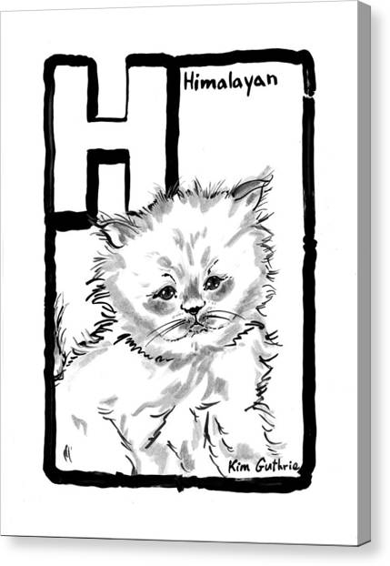 Himalayan Cats Canvas Print - Cat Drawing Himalayan by Kim Guthrie