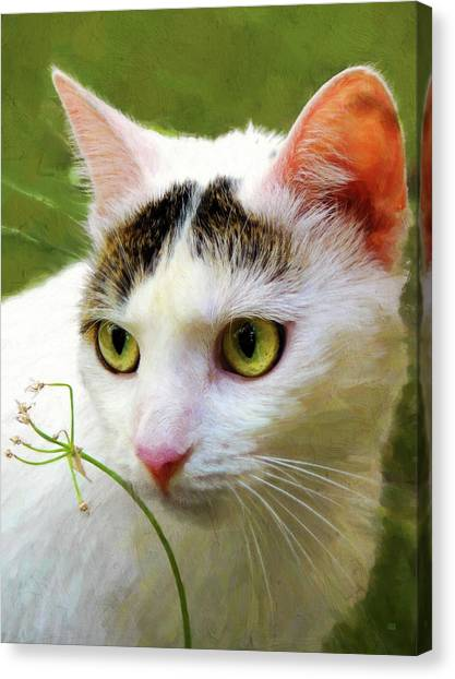 Cat Enjoying The Garden Canvas Print by Menega Sabidussi