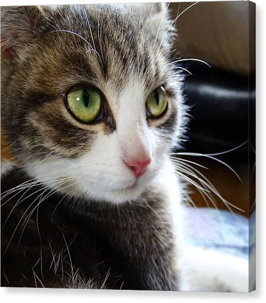 Finches Canvas Print - #cat #eyes #fur #whiskers #nose #feline by Gary Finch