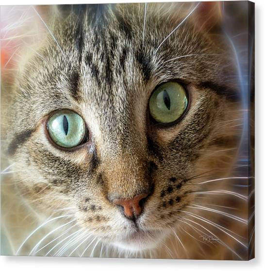 Cat Eyes With Glow Canvas Print