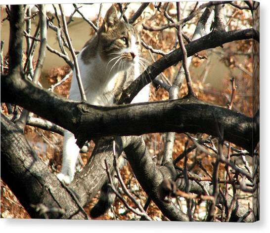 Cat Hunting Bird Canvas Print