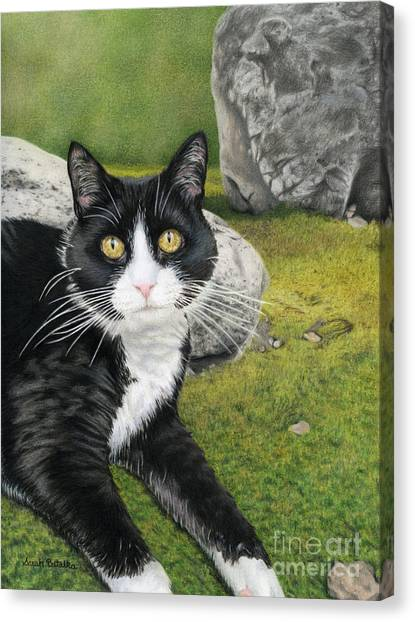 Tuxedo Canvas Print - Cat In A Rock Garden by Sarah Batalka