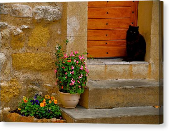 Cat In Capestang France Canvas Print by K C Lynch