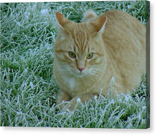 Cat In Frosty Grass Canvas Print