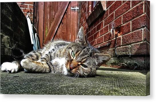 Cat Life Canvas Print