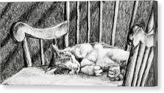 Cat Nap I Canvas Print
