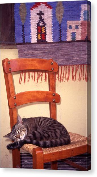 Cat Nap Canvas Print by Steve Outram