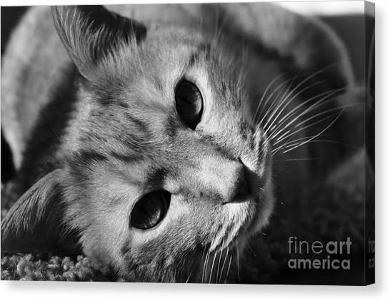Cat Naps Canvas Print