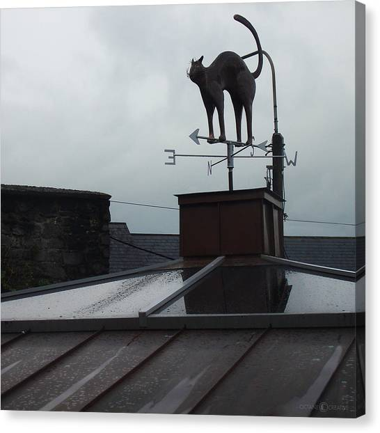 Cat On A Cool Tin Roof Canvas Print