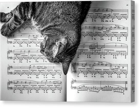 Notes Canvas Print - Cat On A Piano Sheet by Lorrie Joaus
